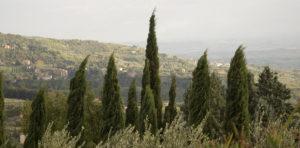 Borgo_La_Casetta_Toscana108